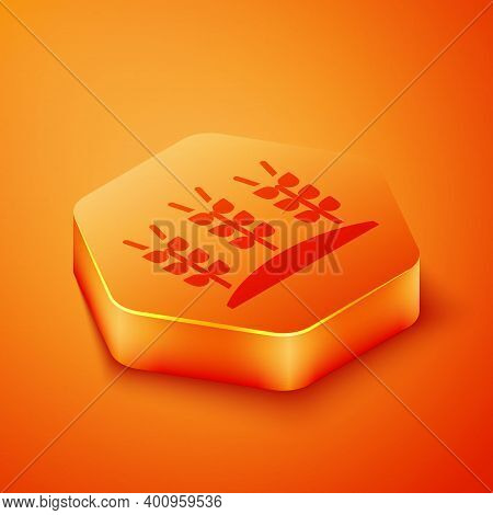 Isometric Cereals Set With Rice, Wheat, Corn, Oats, Rye, Barley Icon Isolated On Orange Background.