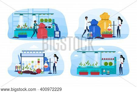 Set Of Different Stages Of Selection Of Agricultural Crops. Male And Female Scientists In Uniform Wo
