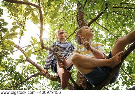 Two Kids Or Friends Hanging On Tree And Having Fun In Summer Park. Naughty Brothers Gripping To Oak