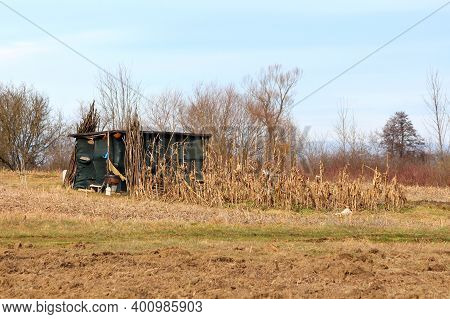 Small Dry Cornfield On Side Of Small Hill Next To Makeshift Homemade Wooden Storage Shed Covered Wit