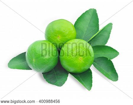 Lime Green Leaves Lime Isolated On White Background. Benefit Cough, Expectorate, Treatment Of Blood