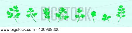 Set Of Cilantro Cartoon Icon Design Template With Various Models. Modern Vector Illustration Isolate
