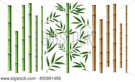 Realistic Bamboo Stick. Brown And Green Tree Branch And Stems With Leaves Isolated Decorative Closeu