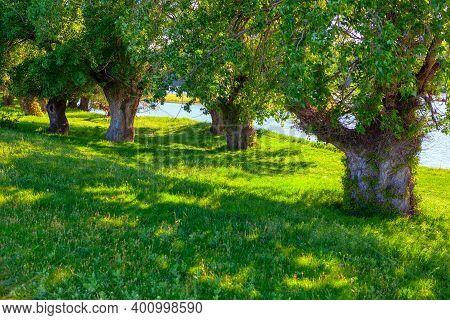 Tropical Coastal Trees . Green Riverside With Tree Shadows