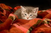 A kitten rests on a blanket with a black background poster