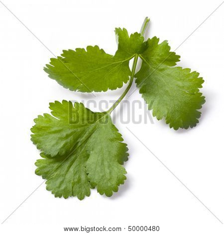 Cilantro or coriander leaf, isolated on white.