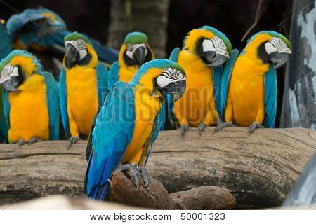 macaw bird sitting on the tree