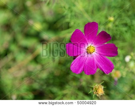 Purple flower on grass background.