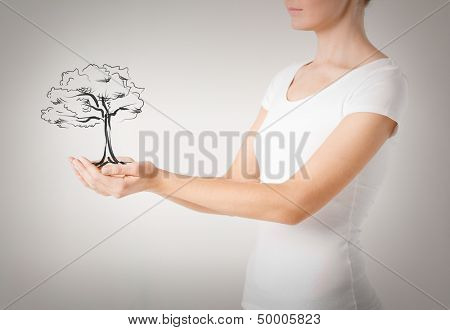 environment, ecology and nature protection concept - woman with small tree in her hands