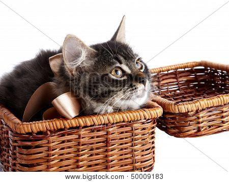 Fluffy Cat With A Bow In A Wattled Basket