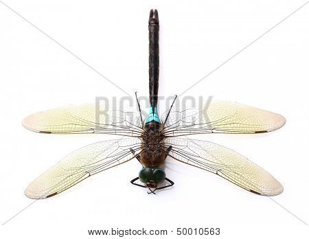 Dragonfly in closeup