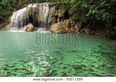 Erawan first level waterfall with fishes swimming in clear water, Thailand