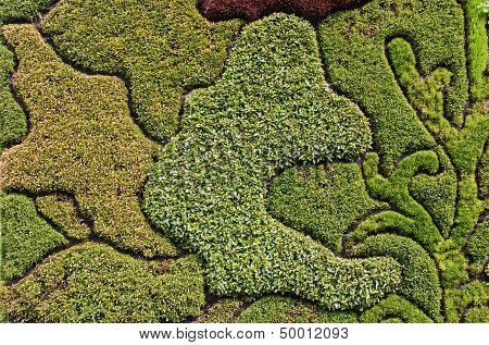 Mosaic pattern of different plants