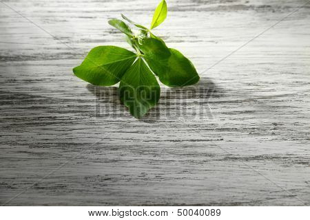 Clover leaf on wooden table