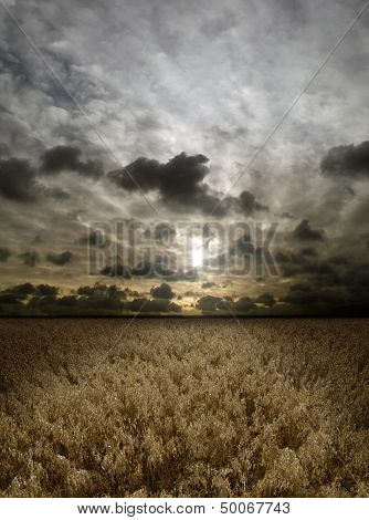Sunset Over Cereals Field
