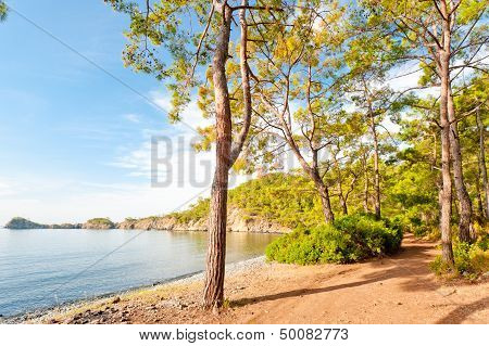 Sea bay with clear calm water in a pine forest