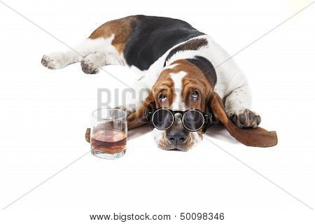 Dog (basset With A Glass Of Whisky
