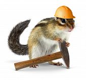 Funny chipmunk builder reconstruction , worker concept poster