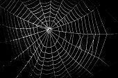 pretty scary frightening spider web for halloween poster
