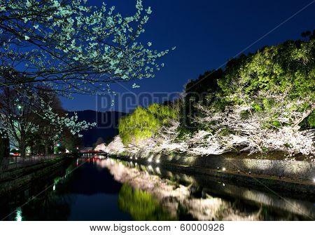 Sakura and river in kyoto at night