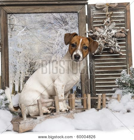 Jack russel sitting on a bridge in a winter scenery, 8 months old