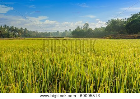 Green Field Landscape With The Sky