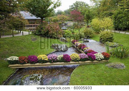 Flowers On Creek In Japanese Garden, Hasselt, Belgium