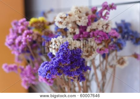 Colorful Dry Flowes