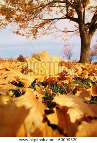 a shallow depth of field shot of leaves on the ground