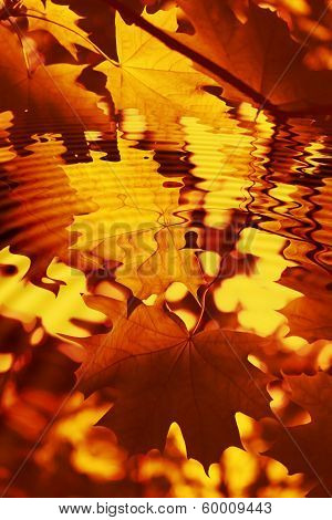 Branch Of Bright Autumn Maple Foliage With Water Ripples