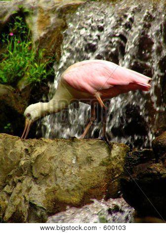 Bird On Waterfall