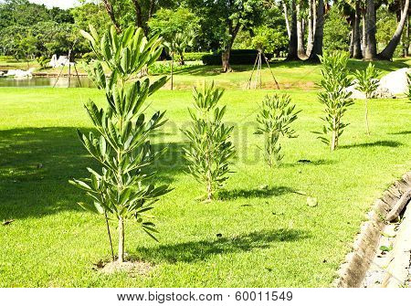 Young Small Tree Blooming In Garden
