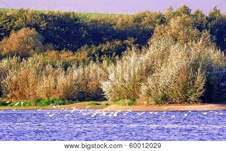 Bird reserve in southern Poland