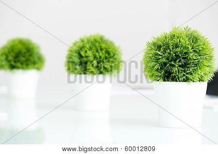 Green plants set in a modern white pot
