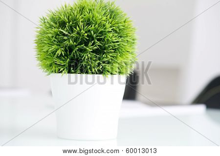 Green plant in a modern white pot