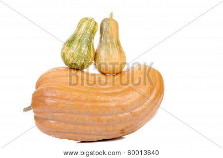 Composition of fresh pumpkins.