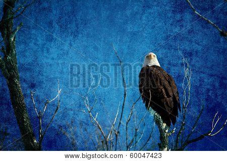 Bald Eagle Blues Into The Night