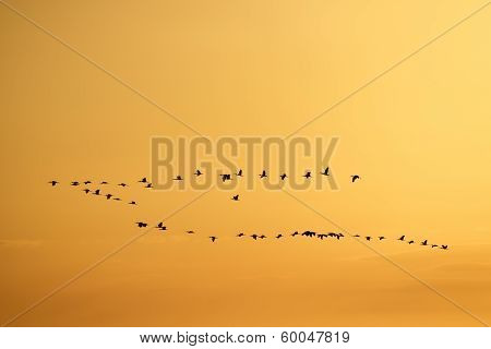 Birds Flying In a