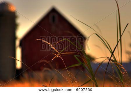 Rural Prairie Grass