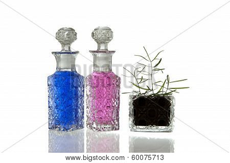 Pink Blue Glass Flagons Plant