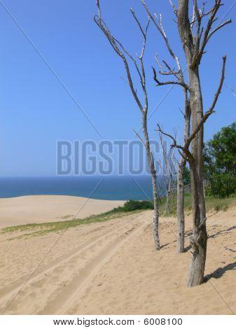 Desert Trees Vertical