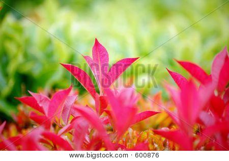 Fresh Leaf
