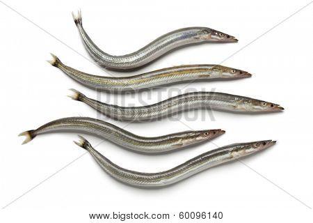 Lesser sand eels on white background