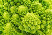 Beautiful closeup background of Romanesco spiral broccoli poster