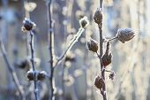 Winter branch plant frost snow white blue blurred background poster