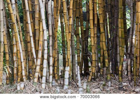 Closeup Background Of Bamboo Patterns And Textures