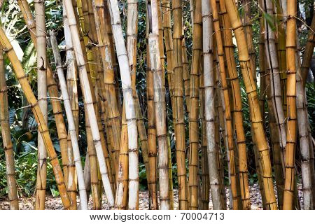 Closeup Of Dry Bamboo Patterns And Textures