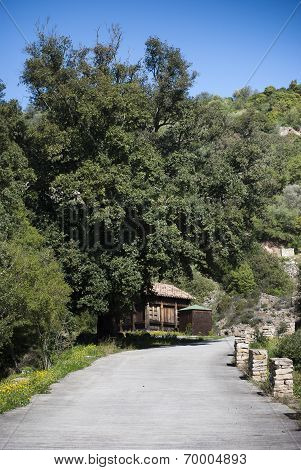 Age-Old holm oak