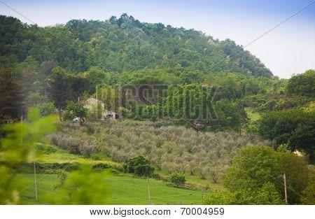 View on mediterranean vineyard
