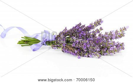 Bunch Of Lavender Flowers With Satin Ribbon, On A White Background